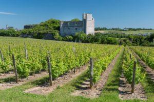 ©D.Drouet-Montjean-sur-Loire