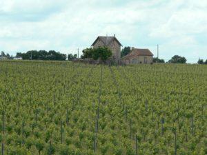 Vignoble la Pommeraye
