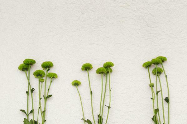 Animation de fleurissement des pîeds de murs